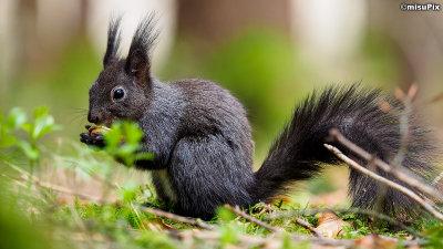 2015-017 Squirrel2