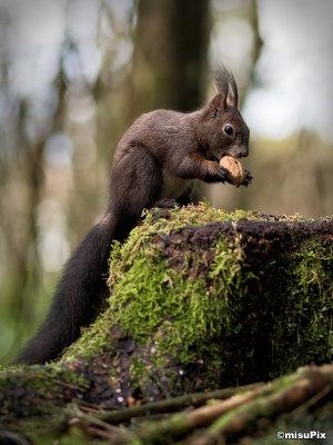 2015-018 Squirrel3