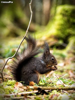 2015-019 Squirrel4