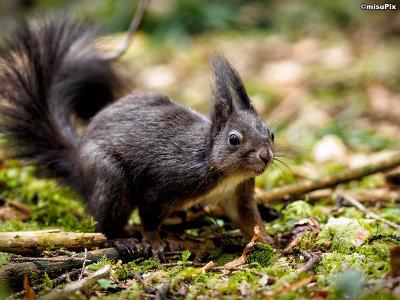 2015-020 Squirrel5
