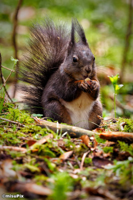 2015-021 Squirrel6