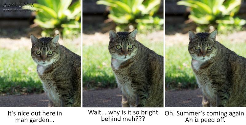 9508_9511 Garfield Tryptich