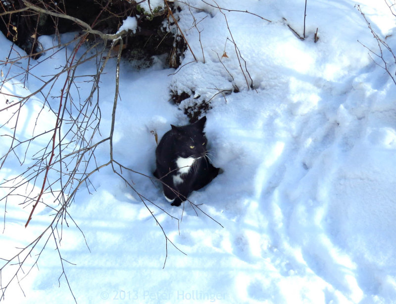 Rocky emerges from the porcupine den