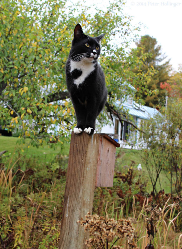 Jimi on the bird house