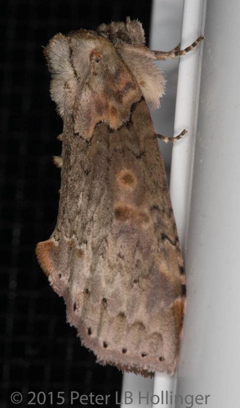 ph_9076 moth.jpg