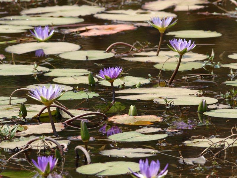 Zambia Pond