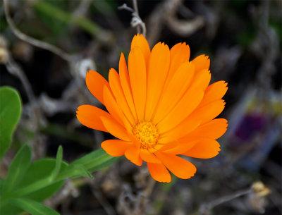 Flower 4A.jpg