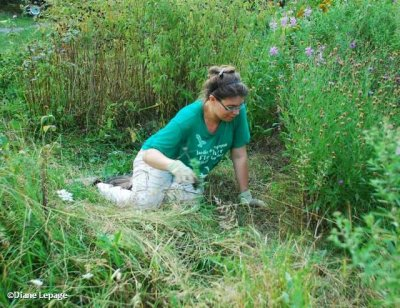 Another volunteer helping weed the butterfly meadow