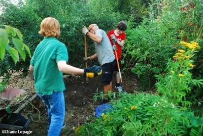 Volunteers helping to weed the butterfly meadow