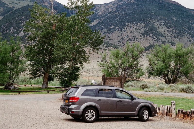 A seagull rests atop the car. Mono Lake, Calif 7/10/2015