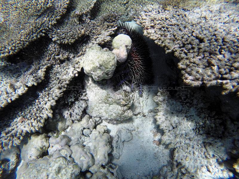 808 Mauritius island - Ile Maurice 2014 - GOPR2589_DxO Pbase.jpg