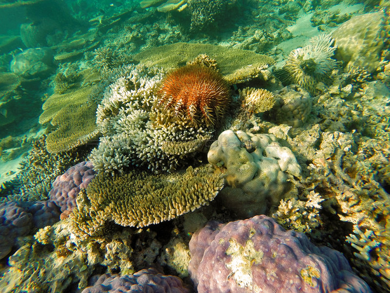 949 Mauritius island - Ile Maurice 2014 - GOPR2768_DxO Pbase.jpg