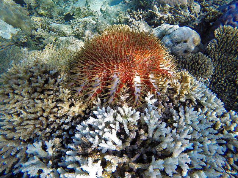 956 Mauritius island - Ile Maurice 2014 - GOPR2775_DxO Pbase.jpg