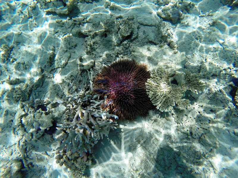 1074 Mauritius island - Ile Maurice 2014 - GOPR2903_DxO Pbase.jpg