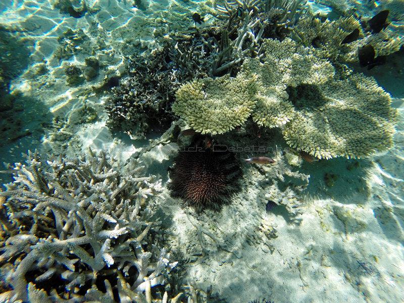 1079 Mauritius island - Ile Maurice 2014 - GOPR2908_DxO Pbase.jpg