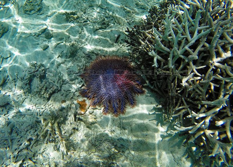 1178 Mauritius island - Ile Maurice 2014 - GOPR3022_DxO Pbase.jpg