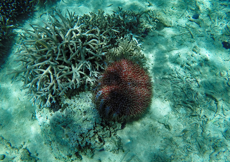 1208 Mauritius island - Ile Maurice 2014 - GOPR3052_DxO Pbase.jpg