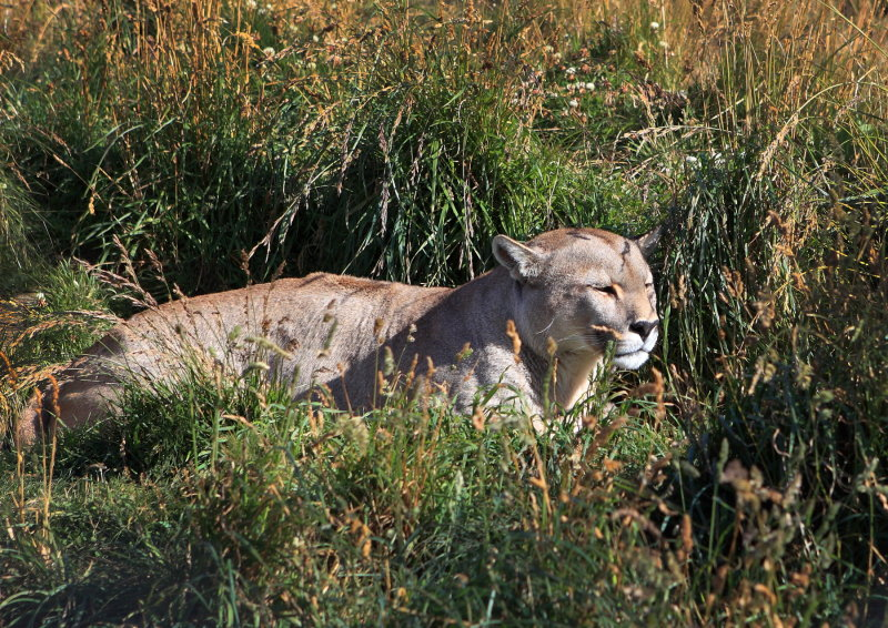 8743 Puma 2.JPG