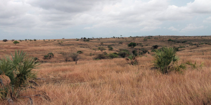 The grass uplands between Mahajanga and Ankarafantsika