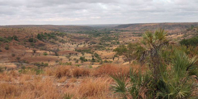 The grass uplands between Mahajanga and Ankarafantsika