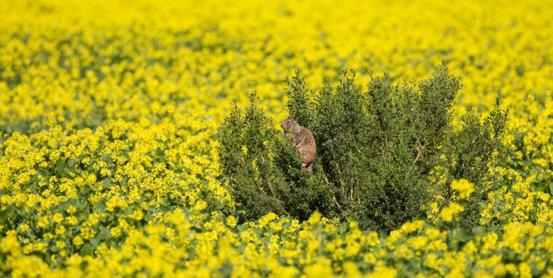 meadow preserve-5348.jpg