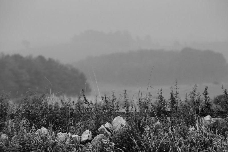20130925 - Greyest of the Grey