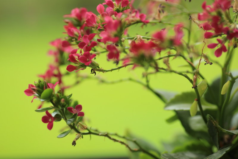 20140906 - Potted