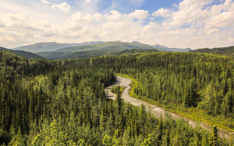 Wilderness around Talkeetna Alaska