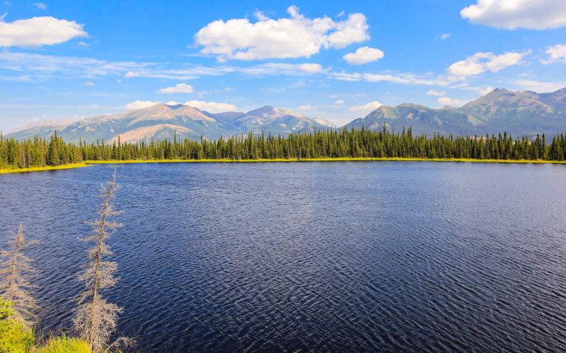 Wilderness view near Talkeetna Alaska
