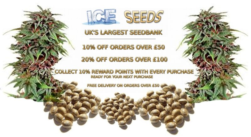 Cannabis Seeds UK