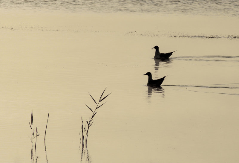 Morning Light in the Camargue