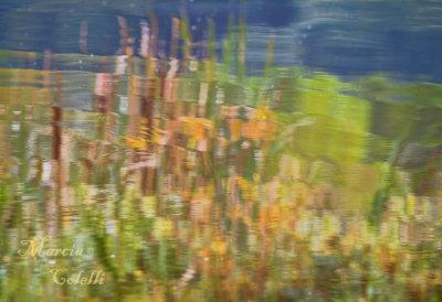 CATTAIL REFLECTIONS_2314.jpg