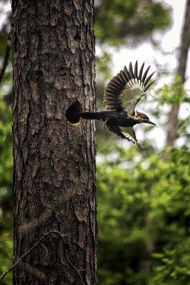 Wild Arkansas Animals