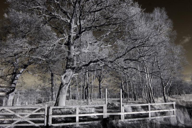 Strensall Common