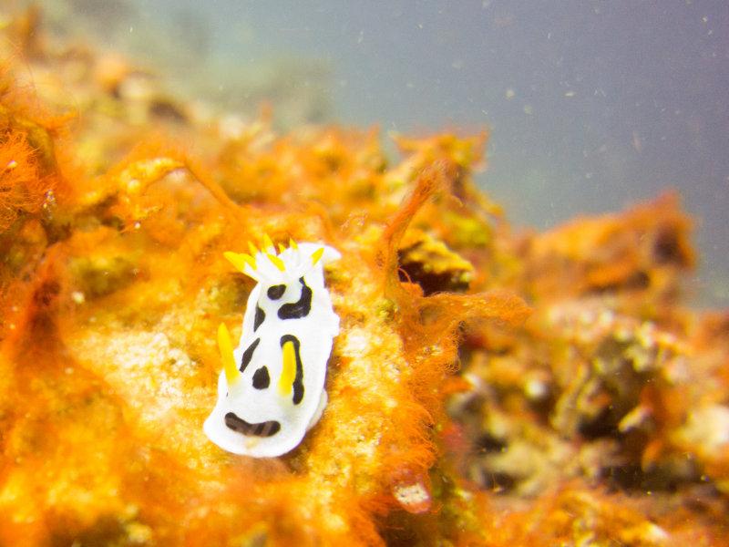 Raja Ampat underwater-3839.jpg