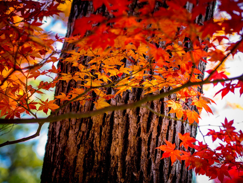 Japan Fall/Winter 2014