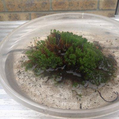 Gutter Moss