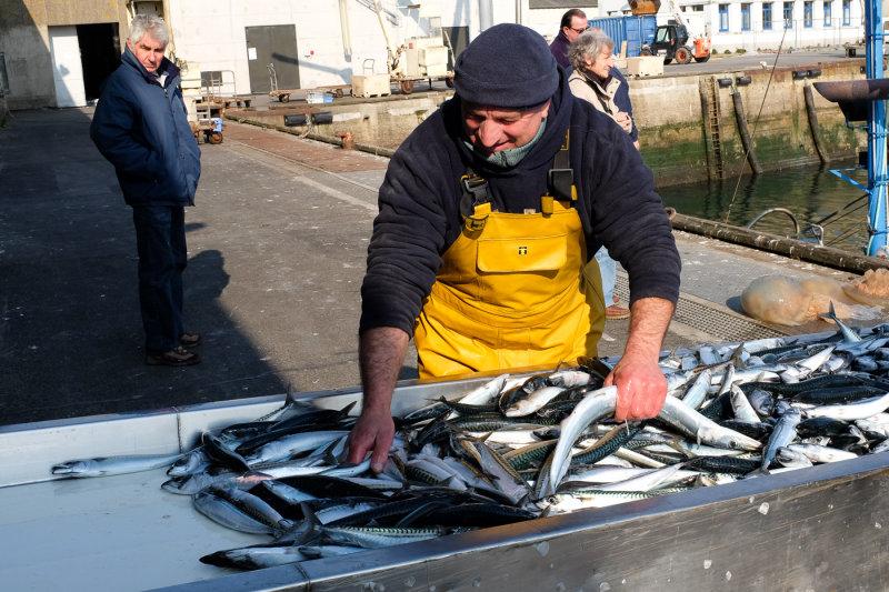 Concarneau - Retour de pêche