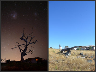 The Wallaroo Tree is no more.....