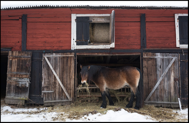 Working horse at Brånäs