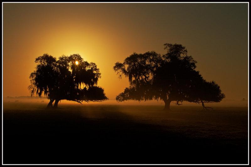 Sunrise and Live Oak Trees