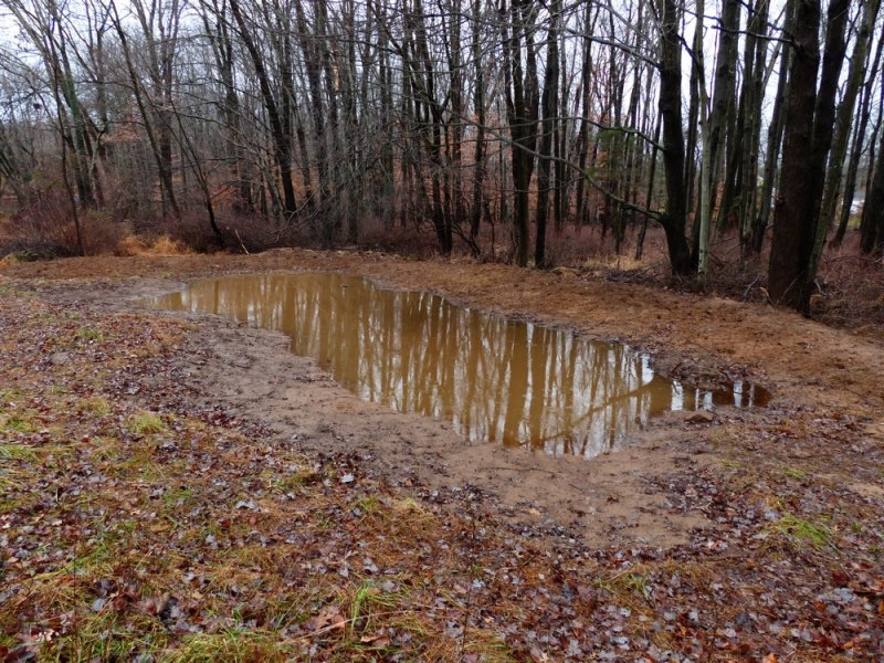 Field Herp Forum View Topic Hand Digging Vernal Pools