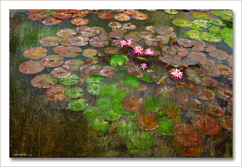 Six water lilies in a pond  72*108cm 2009