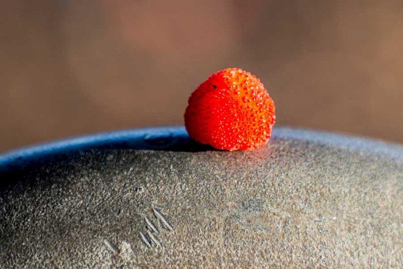 Fruit of Strawberry Tree