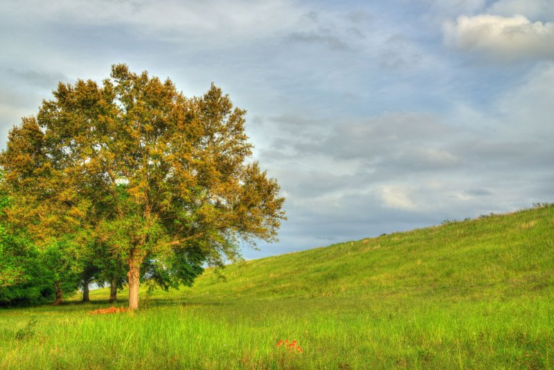 The tree and the levee
