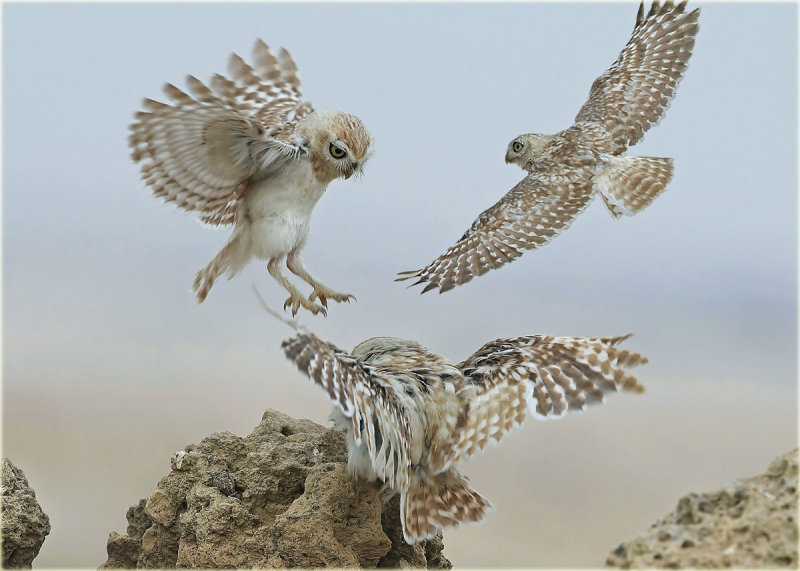 Three Owls-Montage-web.jpg