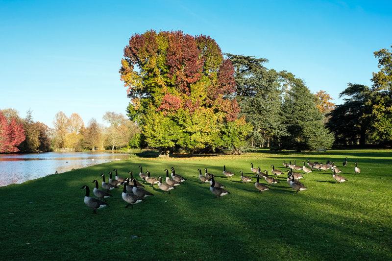 Autumn Colour and the locals