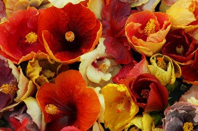Hibiscus anyone?