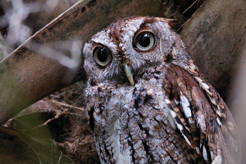 Closeup of a classic owl look