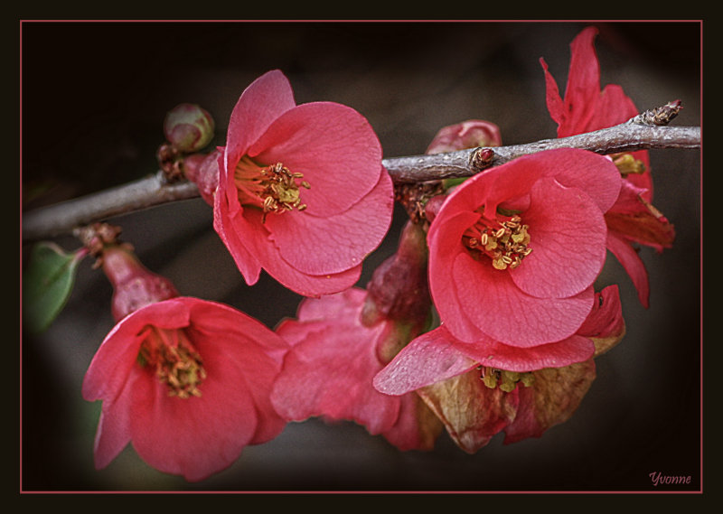 Branch of pink